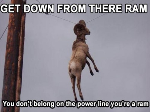 get down from there ram 500x375 Get down from there Ram Humor forum fodder