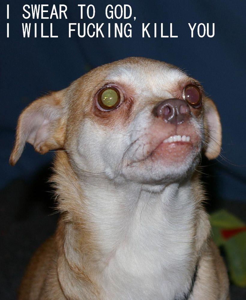 i ll fucking kill you