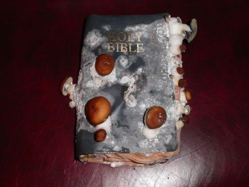moldy bible 500x375 Moldy Bible Religion Nature Humor