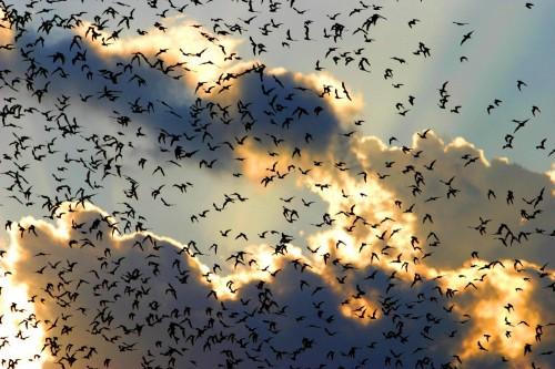 bats - thousands of them