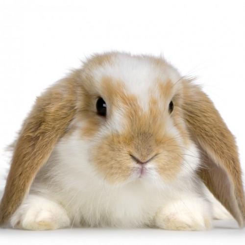 floppy eared bunny | MyConfinedSpace