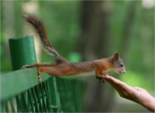 Squirrel Reach