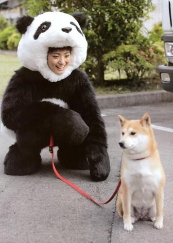 ayaueto panda 356x500 ayaueto panda wtf