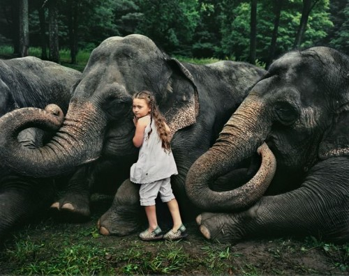 girl with elephants 500x396 girl with elephants wtf