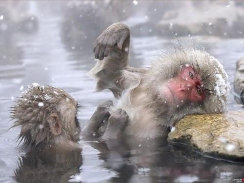 water monkey