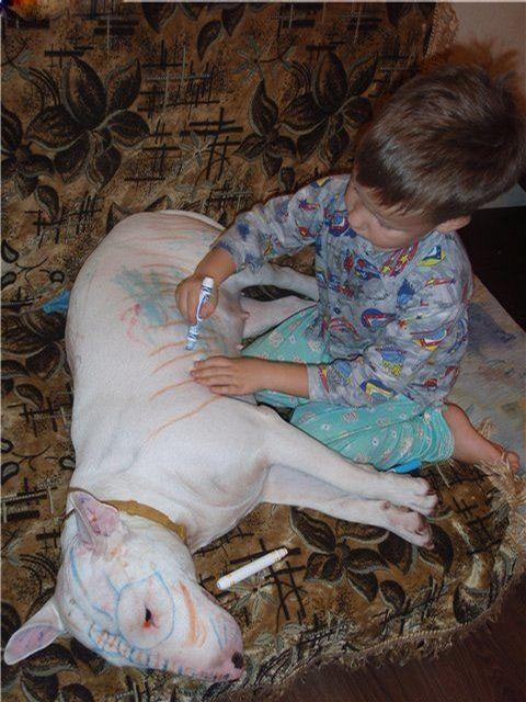Dog Decorator