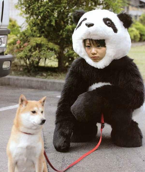 Panda Dog Walker