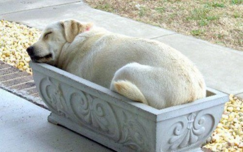 Planter Bed For Dogs