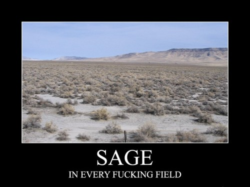 Sage - In Every Fucking Field