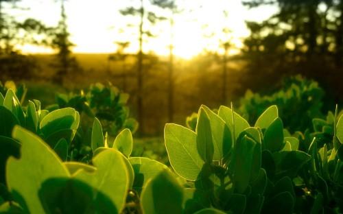 sunlit green leaves