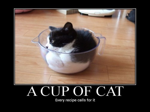 a cup of cat - every recipe calls for it