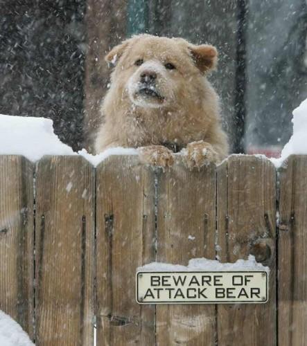 Beware of attack bear