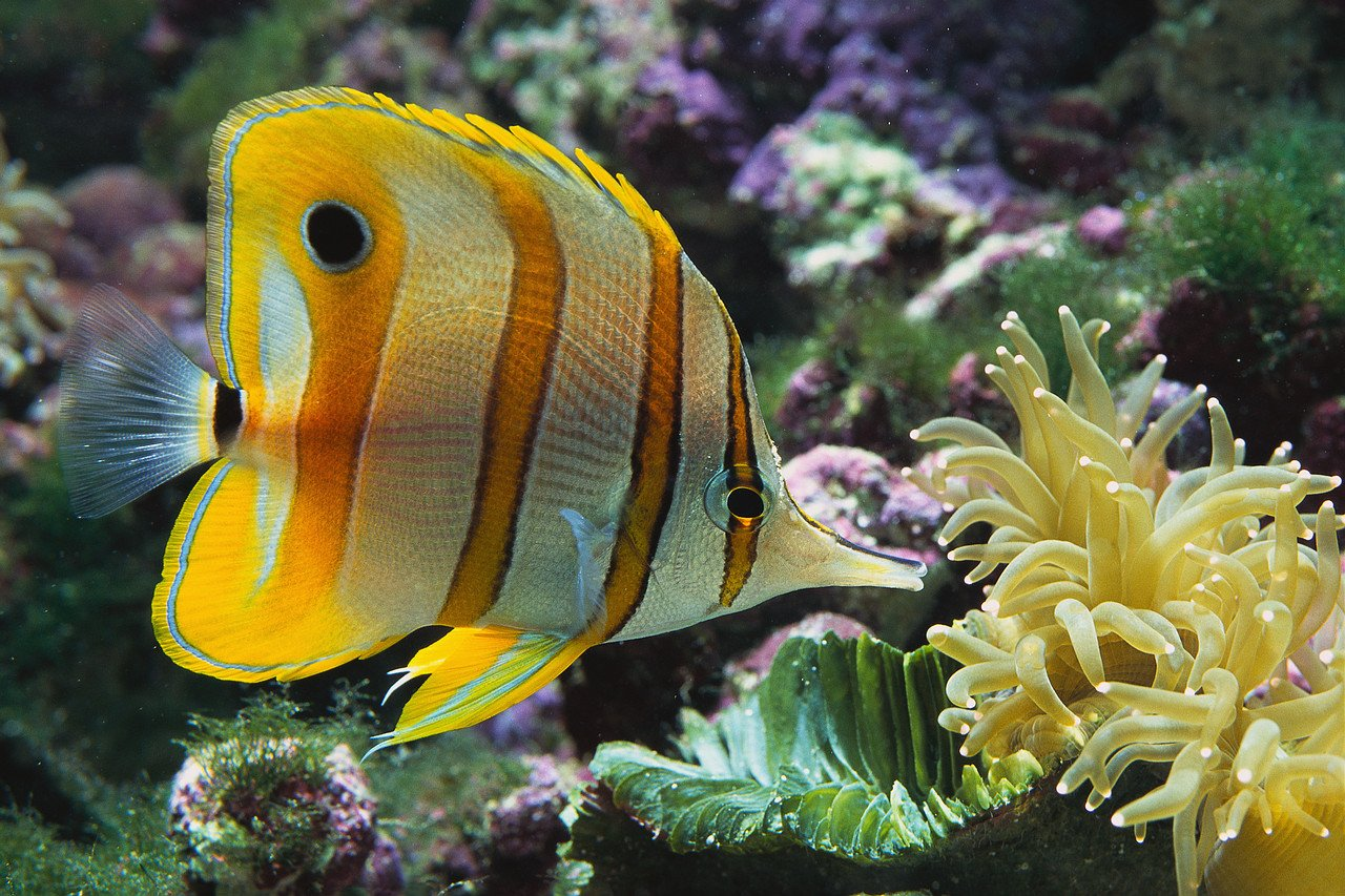 Colorful fish myconfinedspace for Colorful fish pictures