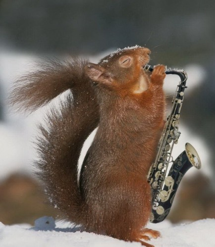 Squirrel Sax Player
