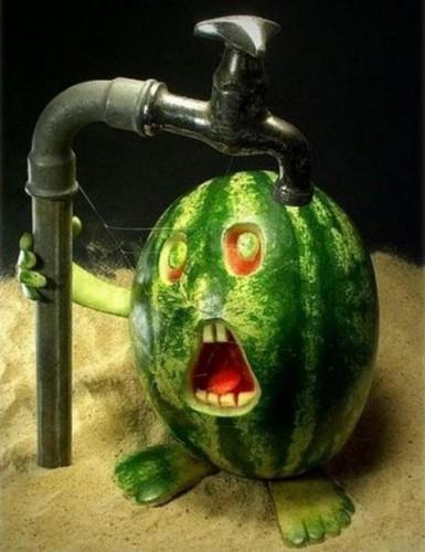 Watermellon Vs Waterpipe