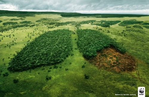 WWF - broken lung