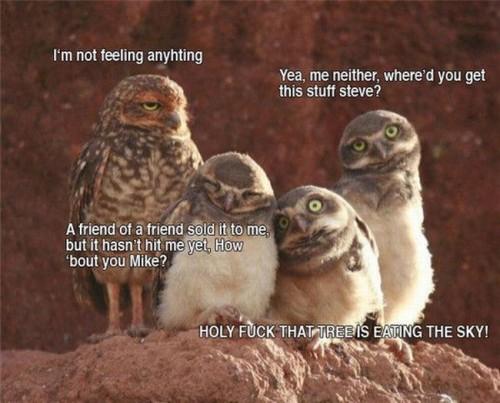 Acid owls
