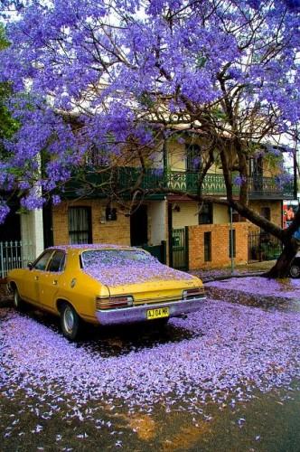 Purple Flower Money Shot