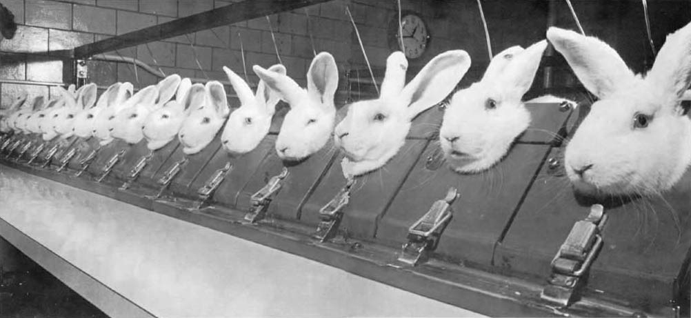 experimental bunnies