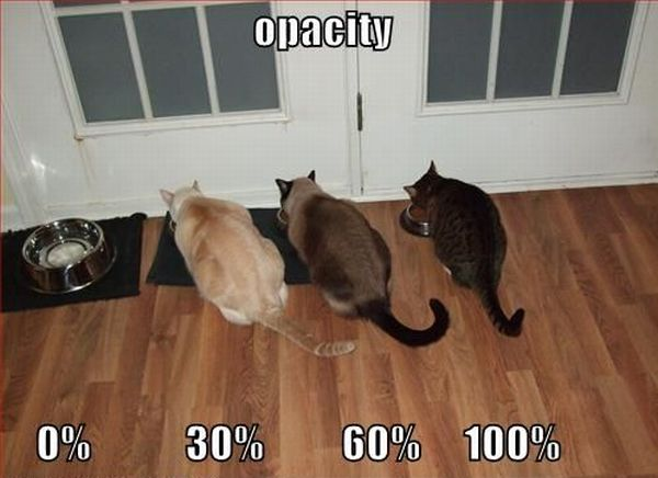 opacity cats