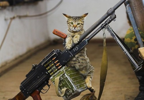 Ammo Cat - Armed and ready