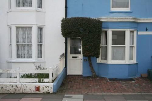 Doorway Hedge