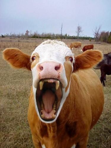 Vampire Cow