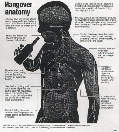 hangover anatomy
