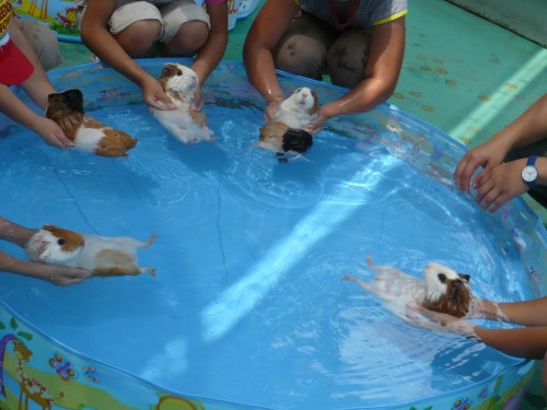 piggy swimmers