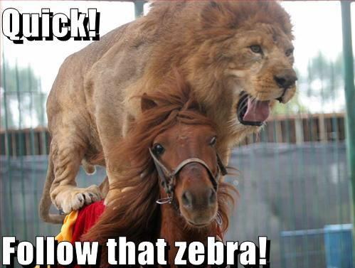 1814 Follow That Zebra! Humor Cute As Hell Animals