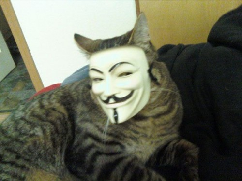 anonymous cat 500x375 anonymous cat lolcats Humor