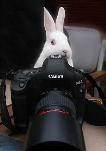 bunny photographer 353x500 bunny photographer Humor Cute As Hell Animals