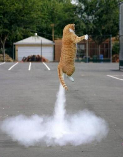 cat rocket