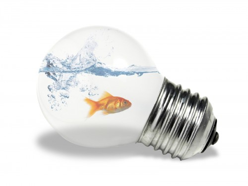fish and a bulb