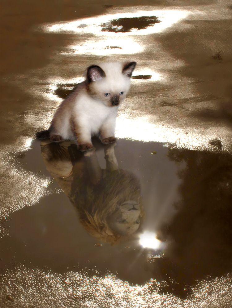 kitten-aspirations