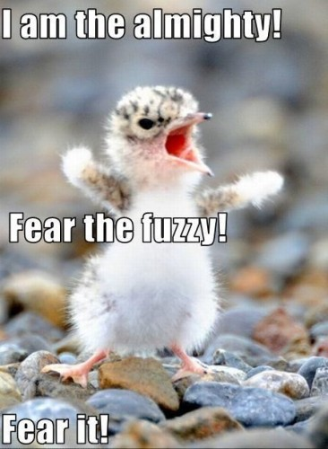 i am the almighty - fear the fuzzy - FEAR IT