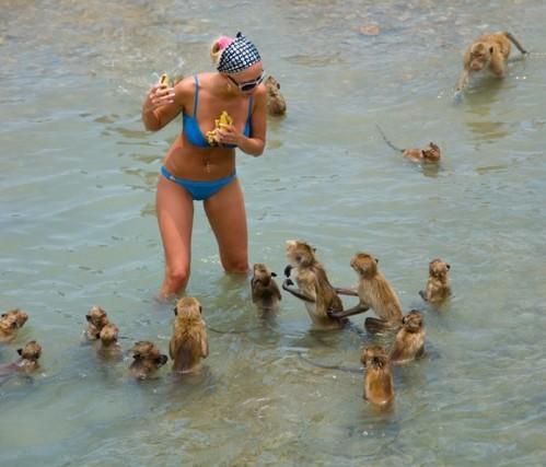 monkeys want bikini girls