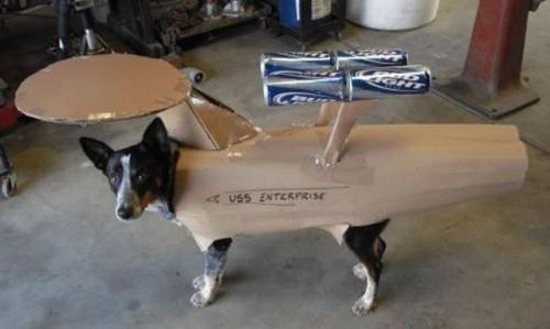 uss enterprise dog