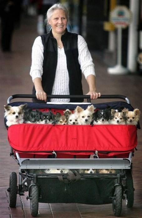 mass dog walker
