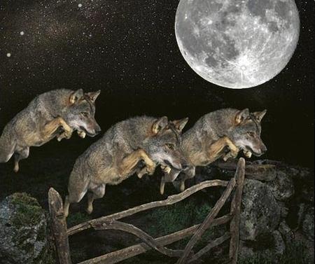 3wolfaward Three Wolf Jump (+Moon) Memes Humor Art
