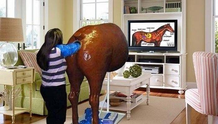 Fake horse anus Fake horse anus wtf Science!
