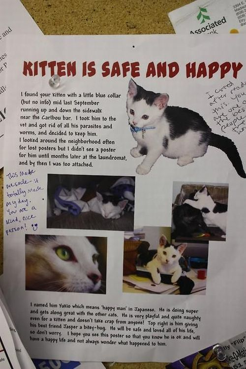kitten is safe and happy