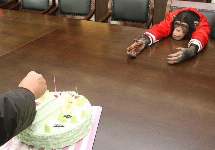 monkey wants cakes monkey wants cakes