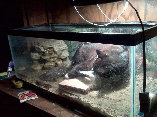 cat in turtle tank