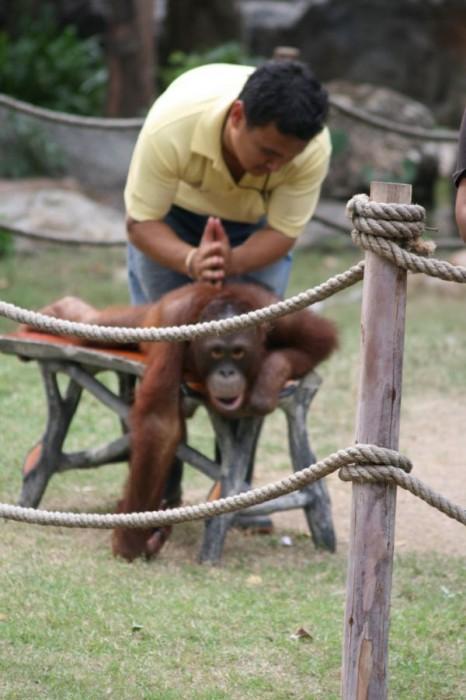 Monkey massage 466x700 Monkey massage Humor