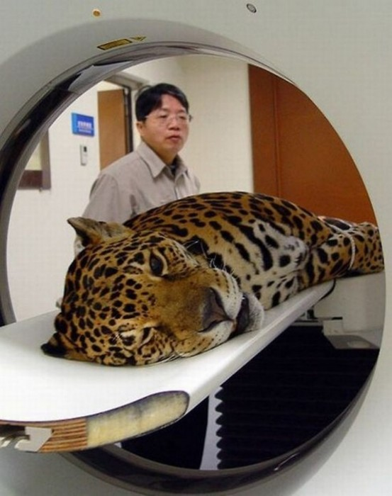 a real cat scan 553x700 a real cat scan Technology lolcats