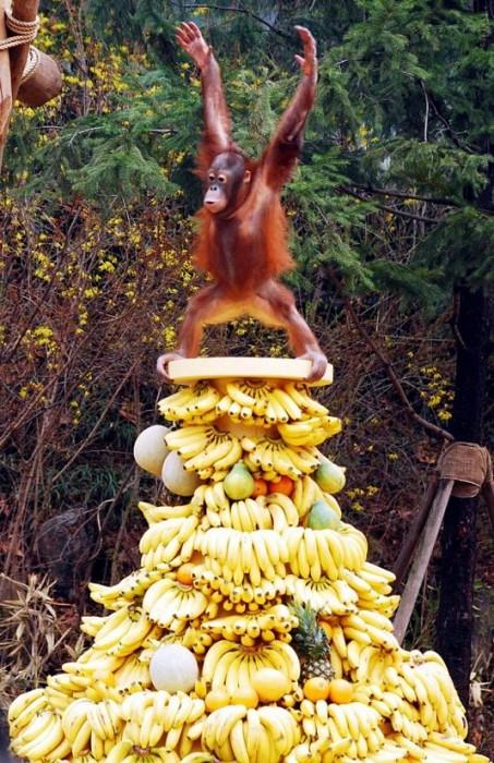 bananaking
