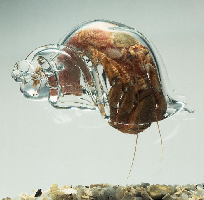 transparent shell