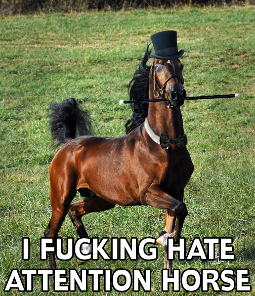 i-fucking-hate-attention-horse.jpg