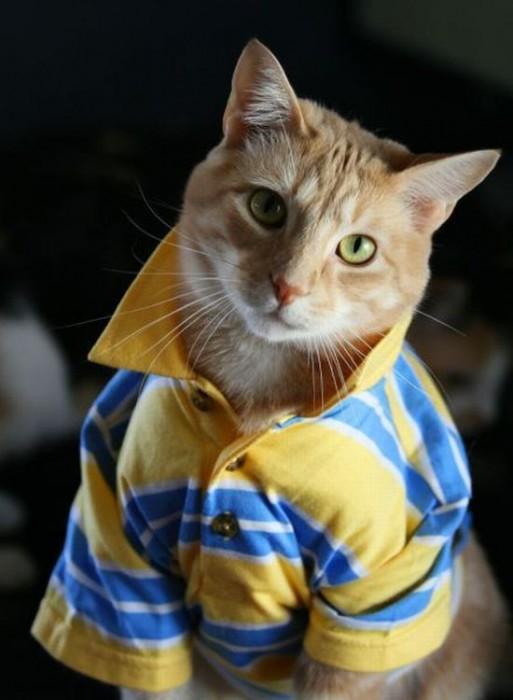 popped collar cat